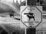 Beware+Of+Machine+Gun+Dog.+King+Crimson+is+a+cool_d460d7_4286824